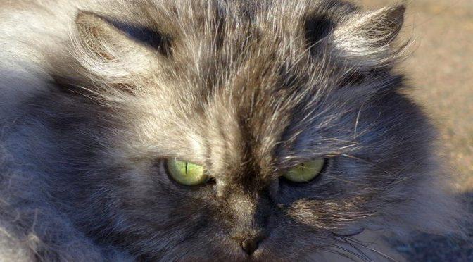 Katze-WordPress absichern